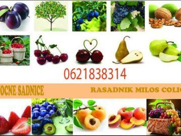 Proizvodnja I prodaja SVIH vrsti sadnica
